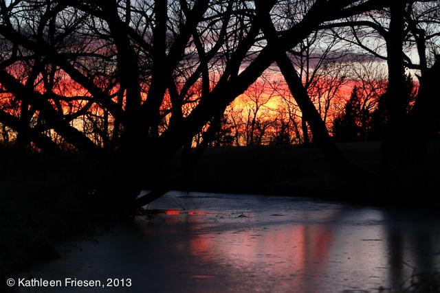 arboretum at sunset-5558