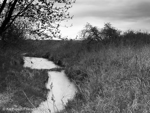 prairie stream